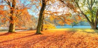 Árboles coloreados hermosos en el otoño, fotografía del paisaje fotografía de archivo libre de regalías