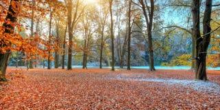 Árboles coloreados hermosos en el otoño, fotografía del paisaje imagenes de archivo