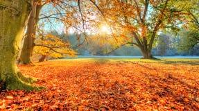 Árboles coloreados hermosos en el otoño, fotografía del paisaje imagen de archivo