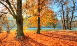 Árboles coloreados hermosos en el otoño, fotografía del paisaje fotografía de archivo