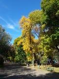 Árboles coloreados hermosos - temporada de otoño Imagenes de archivo
