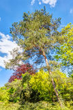 Árboles coloreados multi Imagenes de archivo