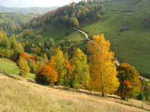 Árboles coloreados otoño imagenes de archivo