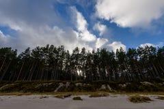 árboles coloreados otoño en la playa Fotos de archivo libres de regalías