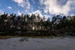 árboles coloreados otoño en la playa Fotografía de archivo libre de regalías