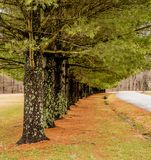 Árboles coloridos con el musgo y las ramas verdes fotos de archivo libres de regalías