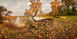 Árboles coloridos del follaje del bosque del otoño en un riverbank Foto de archivo