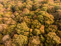 Árboles coloridos del otoño fotografía de archivo libre de regalías