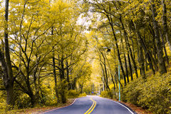 Árboles coloridos del otoño Foto de archivo