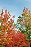 Árboles coloridos del otoño Imagenes de archivo