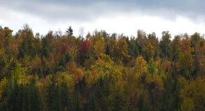 Árboles coloridos del otoño derecho a través imágenes de archivo libres de regalías