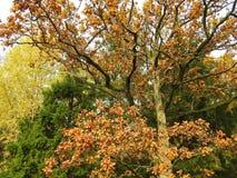 Árboles coloridos del otoño en el bosque, Lituania Fotografía de archivo libre de regalías