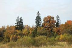 Árboles coloridos del otoño en el bosque, Lituania Foto de archivo