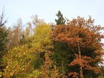 Árboles coloridos del otoño en el bosque, Lituania Fotos de archivo