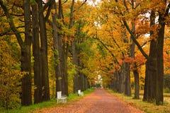 Árboles coloridos del otoño en el parque Foto de archivo