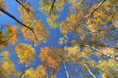 Árboles coloridos del otoño vistos de abajo Imagen de archivo libre de regalías