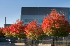 Árboles coloridos delante del edificio de oficinas Imágenes de archivo libres de regalías