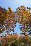 Árboles coloridos en caída fotografía de archivo