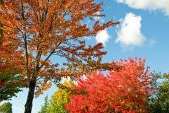 Árboles coloridos en escena del otoño Fotos de archivo