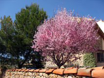 Árboles coloridos en la floración Foto de archivo libre de regalías