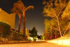 Árboles coloridos en noche del sur Fotos de archivo