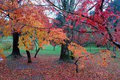 Árboles coloridos en otoño Imagen de archivo libre de regalías
