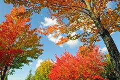 Árboles coloridos en otoño Fotos de archivo libres de regalías
