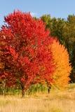 Árboles coloridos en otoño Foto de archivo libre de regalías