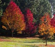 Árboles coloridos en parque del otoño Imagen de archivo libre de regalías