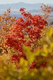 Árboles coloridos en Rocky Mountains cerca de Provo, Utah Foto de archivo libre de regalías