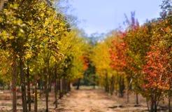 Árboles coloridos frescos Imagen de archivo libre de regalías