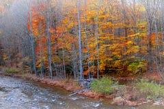 Árboles coloridos por el río Fotografía de archivo libre de regalías