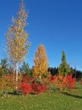 Árboles coloridos que rodean el campo del golf Fotos de archivo