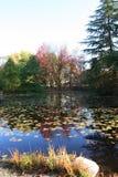 Árboles coloridos reflejados en el agua Fotografía de archivo