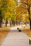 Árboles con amarillo y hojas y sendero del verde con los bancos Imagen de archivo