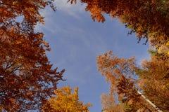 Árboles con colores del otoño contra el cielo azul fotografía de archivo libre de regalías