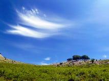 Árboles con el cielo azul fotos de archivo