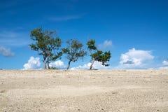 Árboles con el cielo azul fotografía de archivo libre de regalías