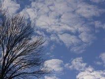 Árboles con el cielo del invierno del claro Fotos de archivo libres de regalías