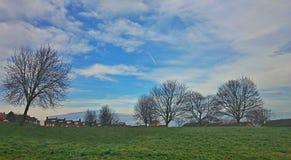 Árboles con el cielo del verano Foto de archivo libre de regalías