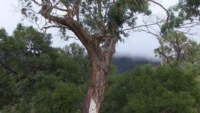 Árboles con el cielo y otros árboles almacen de video