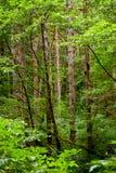 Árboles con el musgo Foto de archivo libre de regalías