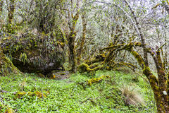 Árboles con el musgo Imagen de archivo