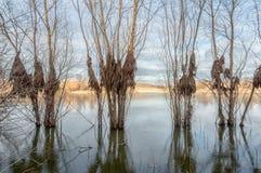 Árboles con el musgo en un nivel, dejado después de la pendiente del st del agua Fotografía de archivo libre de regalías