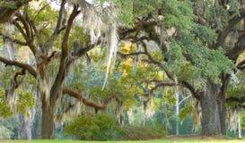 Árboles con el musgo español Foto de archivo libre de regalías