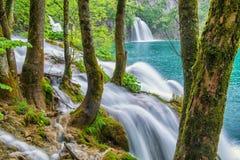 Árboles con el musgo y la cascada en la reserva de naturaleza de los lagos Plitvice Fotografía de archivo