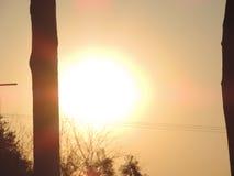 Árboles con el sol Imagen de archivo
