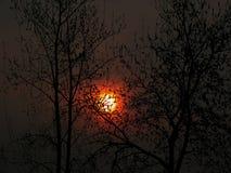 Árboles con el sol Imagen de archivo libre de regalías