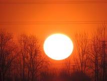 Árboles con el sol Imagenes de archivo