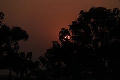Árboles con el sol Foto de archivo libre de regalías